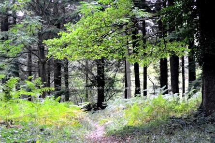 greenwood_small