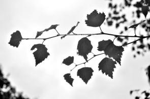 leaves_DSC_small