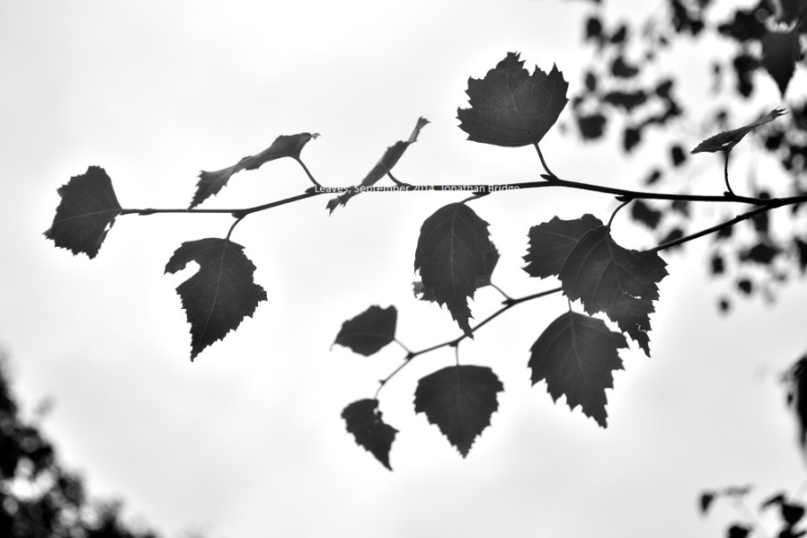 leaves_DSC_small