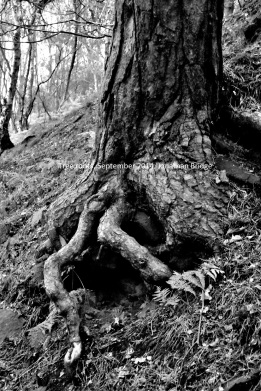 roots2_small